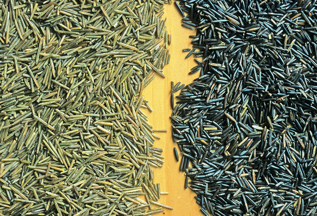 Wild Rice by Wisconsin Department of Natural Resources
