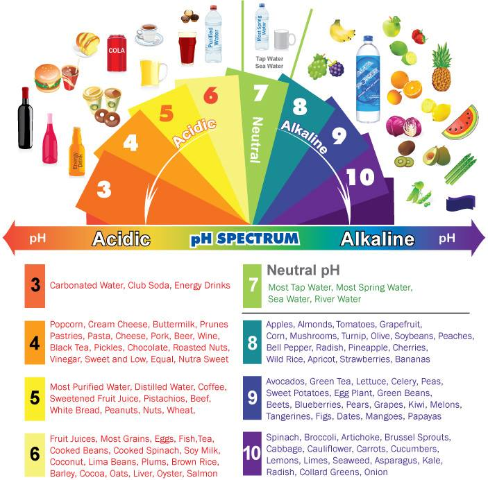 pH spectrum acidic and alkaline foods